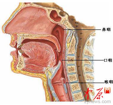 鼻咽部解剖结构图